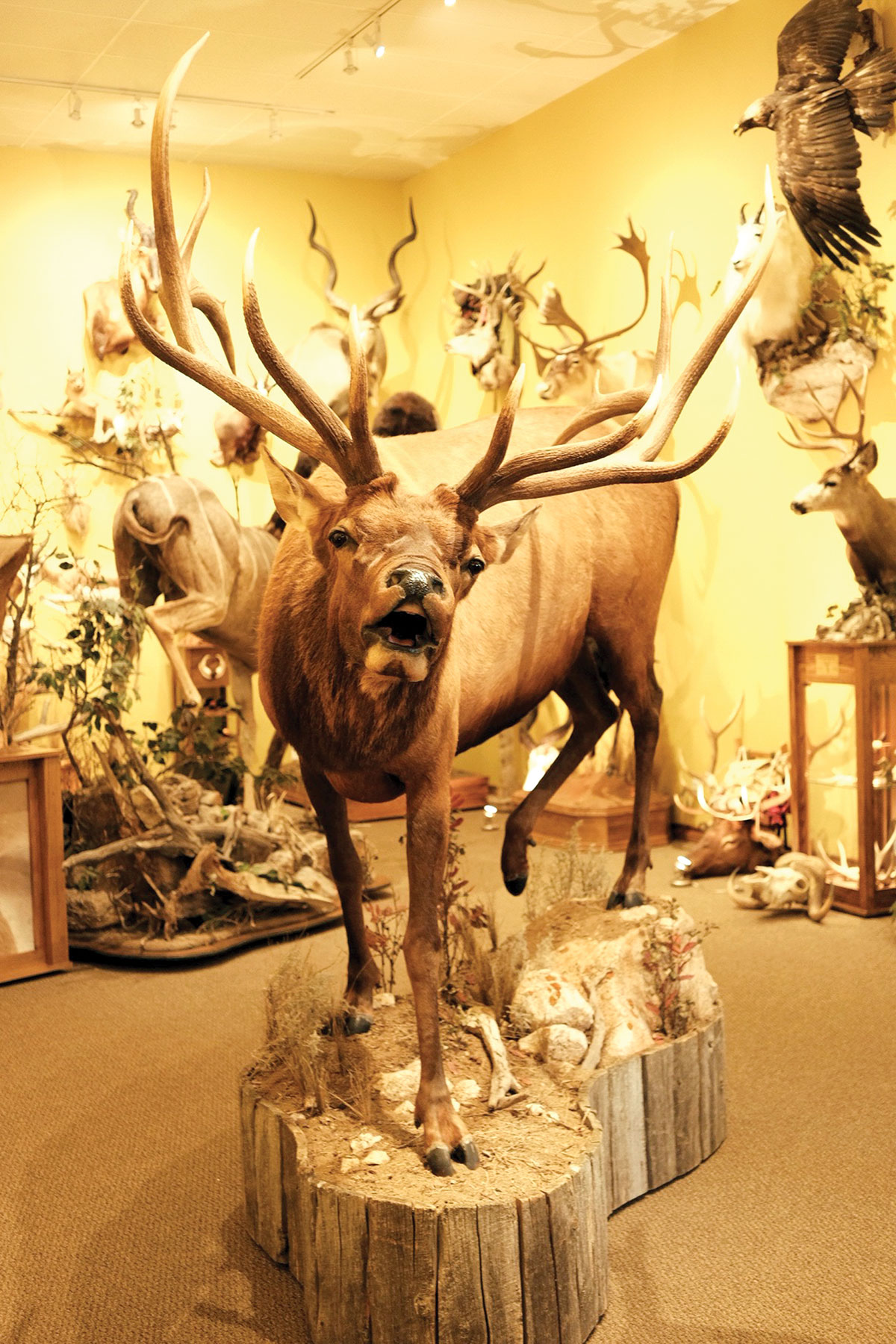 Photograph of Top Notch Taxidermy by Lita Fleming